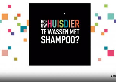 Video thumbnail Hoe was je je hond of kat met shampoo